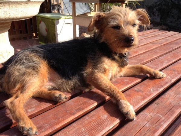 Meine Lotta genießt ein Sonnenbad