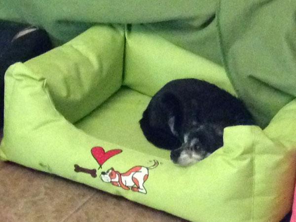 Oma Carlotta hat sich für das hellgrüne Bettchen entschieden