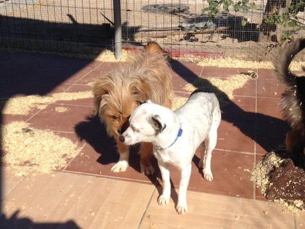 Chewbacca und Pulgui