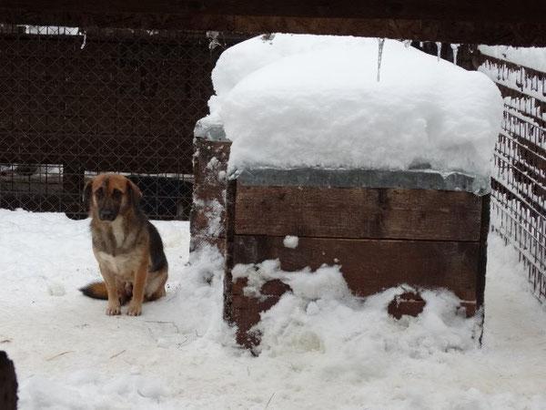 Der Winter für einen Hund in einem rumänischen Tierheim...