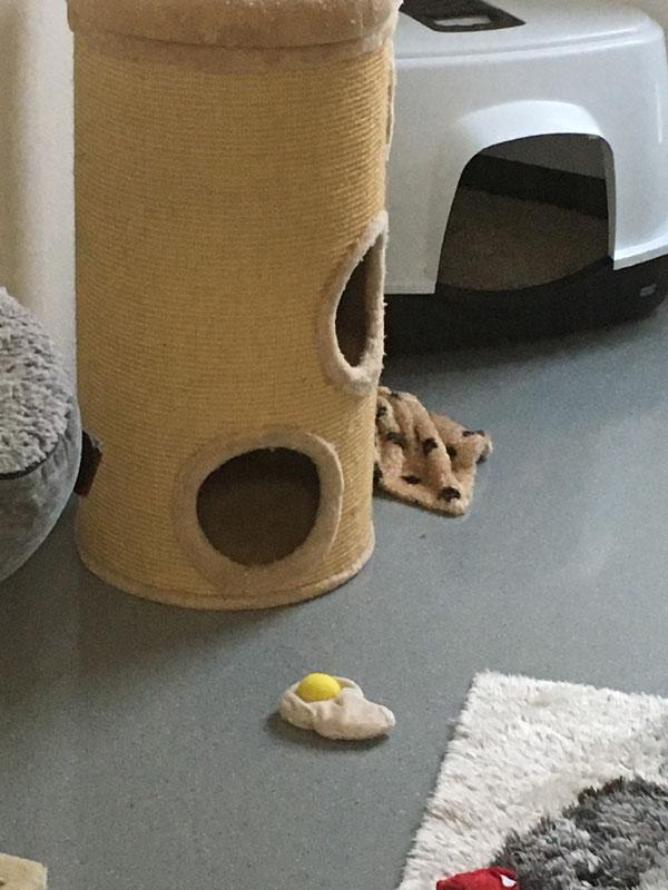 """Eines """"unserer"""" Katzen-Schmusekissen von 4 cats"""