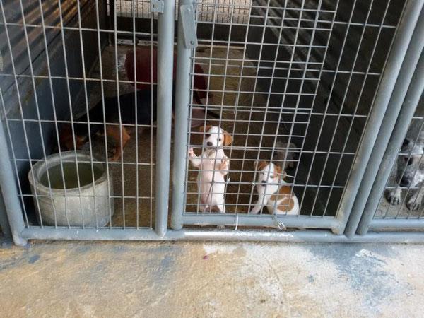 Sam und Lucky bei CERECO im Adoptionscentrum