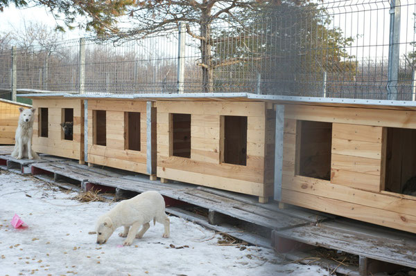 3. Doppel-Hundehütte über Pro Dog Romania eV für TH Ploiesti