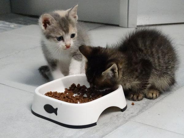Quelle: Tierhilfe Hoffnung eV