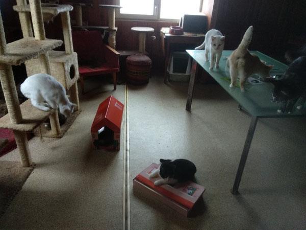 Ein Teil der Katzen bei Viktor