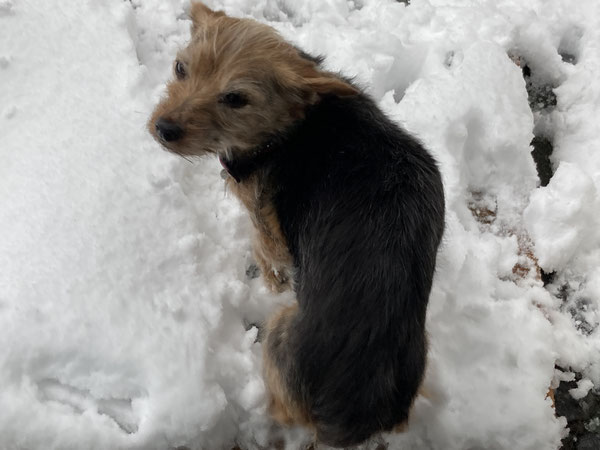 Lotta: muss ich im Schnee wirklich nach draußen?
