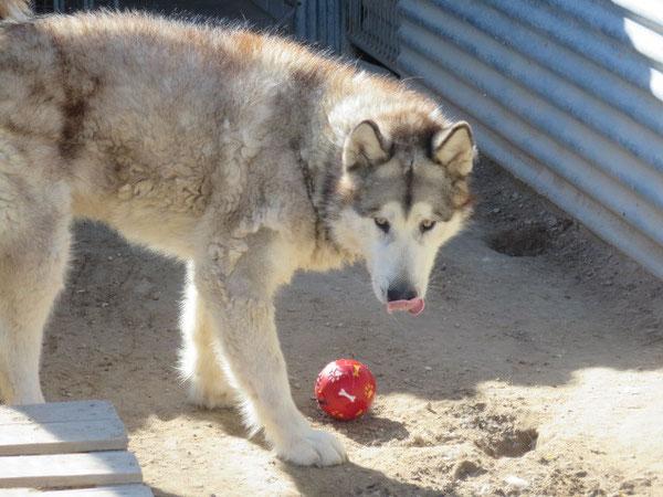 Wirfst Du mir bitte den Ball?