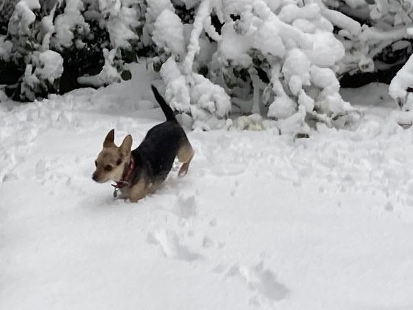 Schnee ist lustig - wenn man danach wieder zurück ins warme Haus flitzen kann