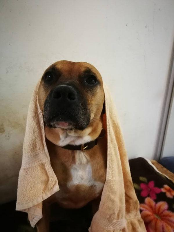 Spike wartet im Tierheim Koblenz auf ein neues zu Hause