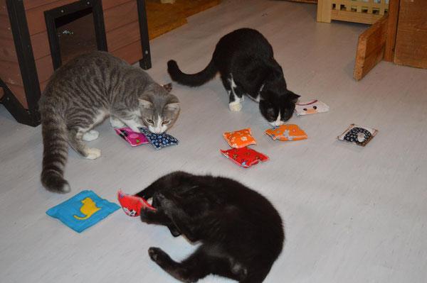 Große Freude bei den Katzen wenn es wider Stinkekissen zum spielen gibt