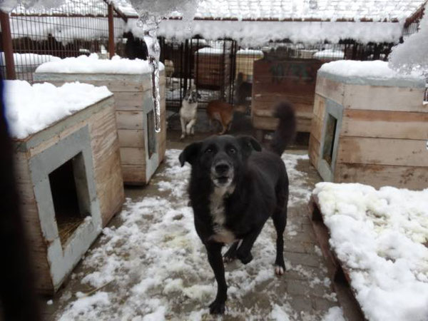 Hunde in der Smeura - dem Terheim der Tierhilfe Hoffnung eV