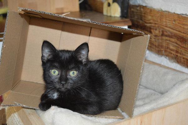 Lilith von der Katzenhilfe Yuma & Co - noch auf der Suche nach einem zu Hause