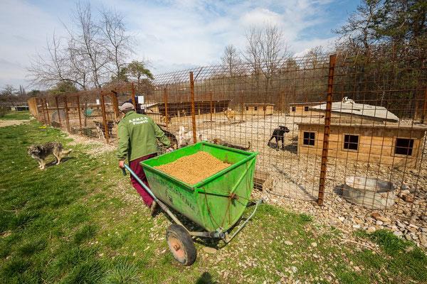 33,-- € für Futter im Tierheim BUCOV, Ploiesti, Rumänien