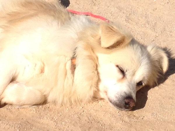 Copito genießt wärmende Sonnenstrahlen
