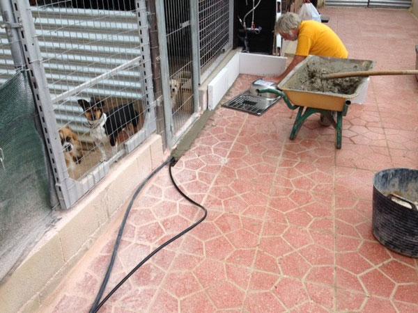 """Die """"Hunde-Bauaufsicht"""" verfolgt jeden Arbeitsschritt aus dem Hintergrund ;-)"""