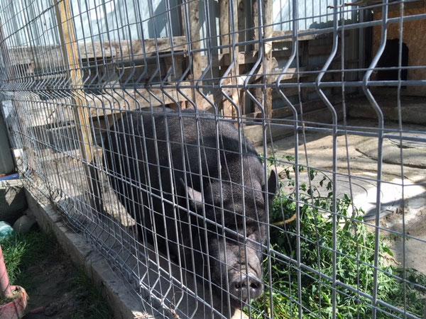 Ein Schweinchen macht die kleine Farm zu einer richtigen Farm