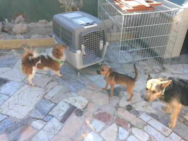 Lasso, Suso und Pepe staunen