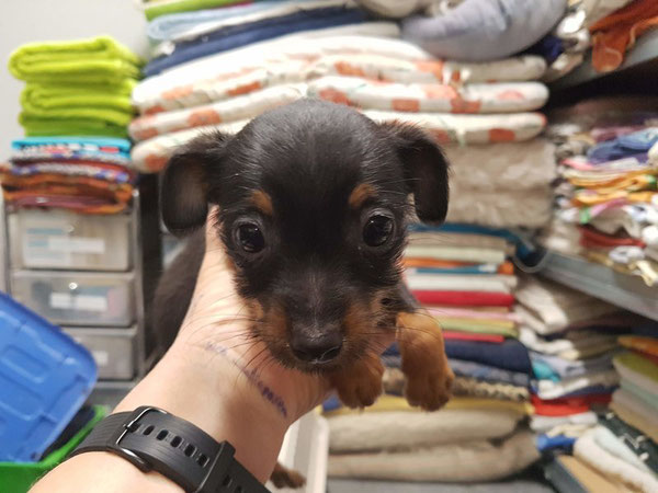 Mini-Kerlchen Charlie