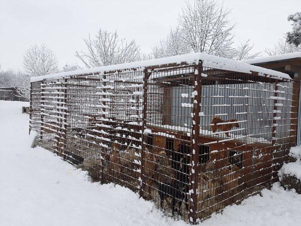 Ein Gehege im Tierei Bucov, in Ploiesti Rumänien