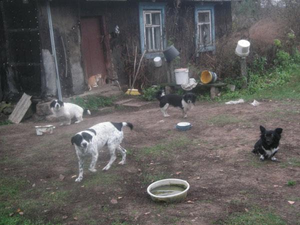 Die wilden Hunde bei Oma Jana