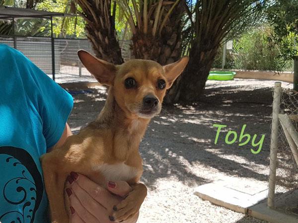 Auslösegebühr für Toby: 90,-- €