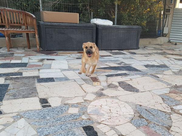 Der kleine Fund-Welpe Knut freut sich über seinen Platz im Refugio Esperanza
