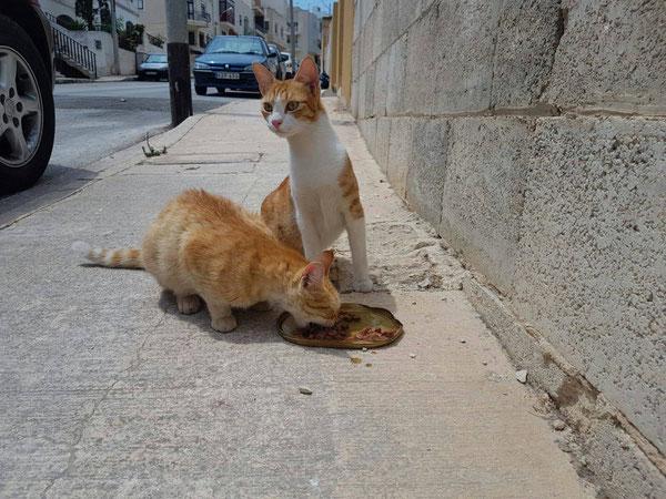 Zwei von Sigrids Kostgängern auf Malta