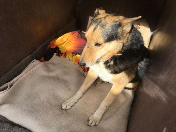 Rex - seit 5 Jahren wartet er auf eine Familie
