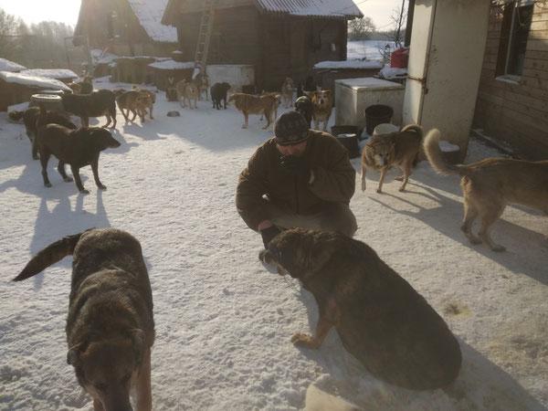 Viktor bei seinen Hunden