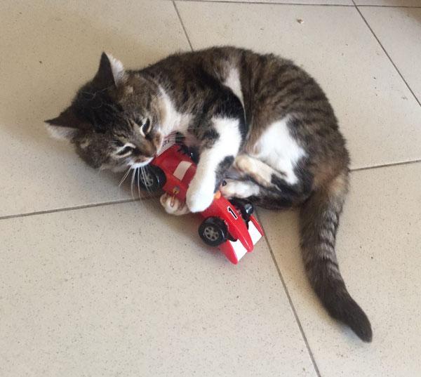 Ein Kätzchen in den Schlupfwinkeln Moldawien spielt glücklich