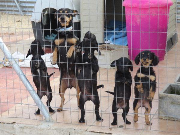 Peppi und ihre Babies durften zusammen in den offenen Carport ziehen