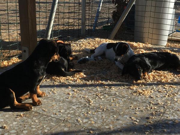 Bubble, Bailey, Blaire und Bolle