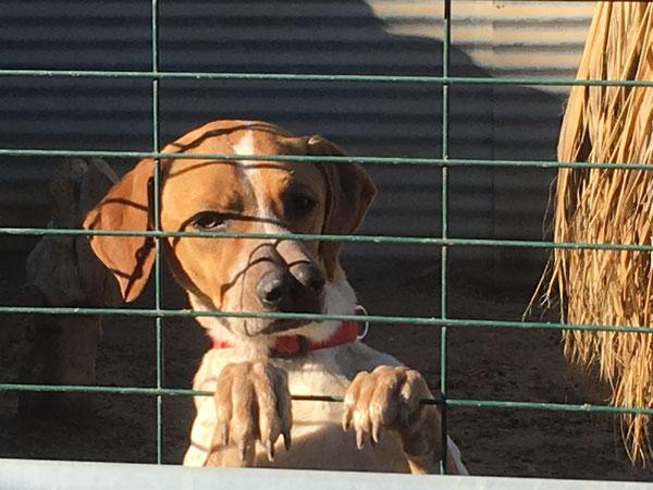 Tosca hält Ausschau nach dem Paketboten - und nach einer Familie auf die sie so wartet