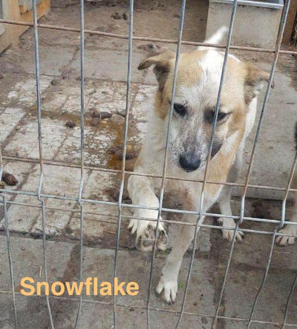 Snowflake bettelt darum, das Gehege schnell verlassen zu dürfen