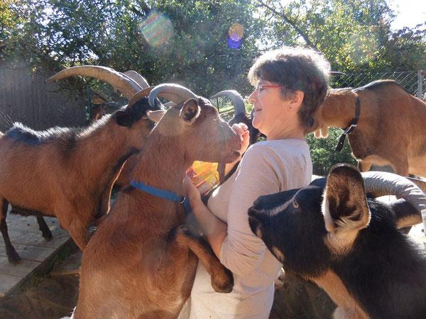 Helga und die Ziegen