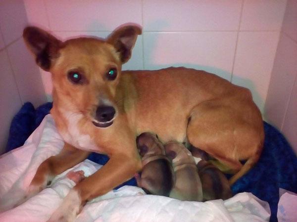 Dientes und ihre Babies