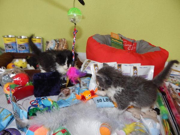 Katzenhilfe Yuma & Co, Nagold