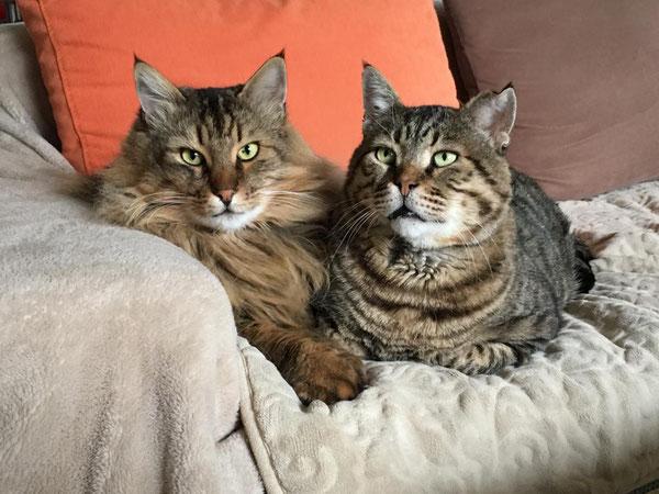 Zwei der Katzen, die Wilfried zu Hause versorgt