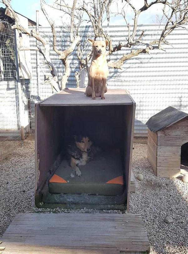 Zwei Herzenshunde: Rex und Ellie, die beide im Refugio Esperanza seit Jahren auf eine Familie warten. WARUM?