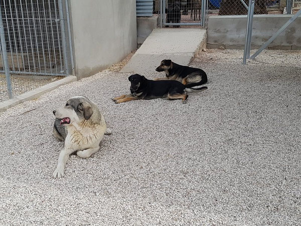 Sergio, Gisi und Gloria