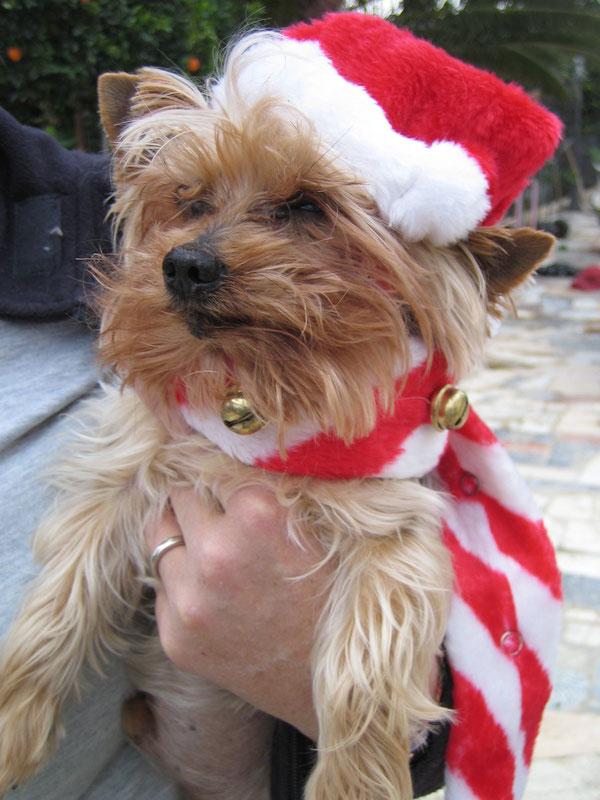 """Unser """"Picolaus"""" im letzten Jahr zu Weihnachten"""