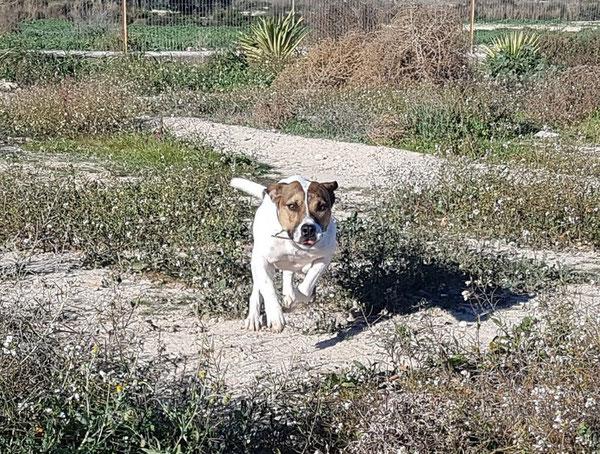 So wie Felipe hier genießen die Hunde es im Auslauf endlich mal ausgiebig rennen zu können