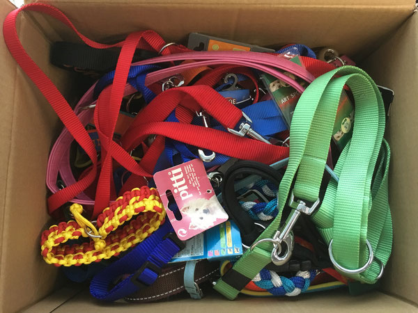 Halsbänder und Leinen für die Hunde