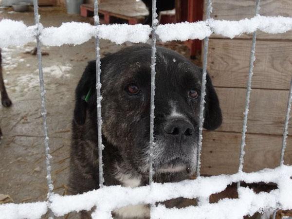 Foto. Tierhilfe Hoffnung eV