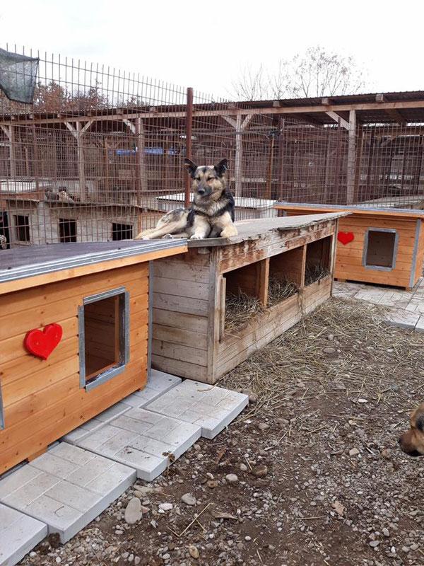 Neue Hütten im Tierheim Bucov in Ploiesti/Rumänien dank Spenden an Pro Dog Romania