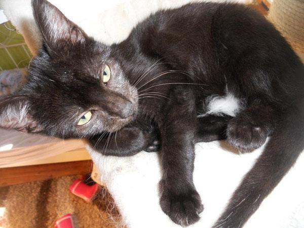 Ostfriesenpaula - Katzenhilfe Yuma & Co, Nagold