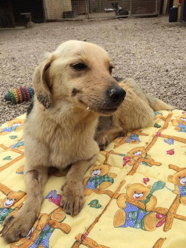 Die liebevolle Betreuung und der Tierarzt haben schon geholfen!