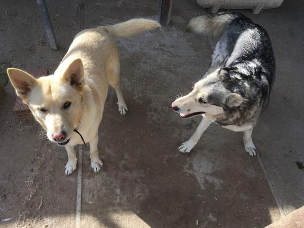 Luna und Taka - seit Jahren warten sie im Refugio Esperanza auf eine Familie