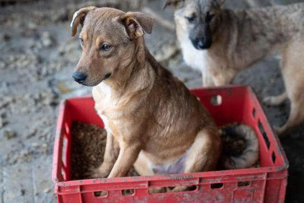 Eljo von Pro Dog Romania eV dankt Euch für das Futter