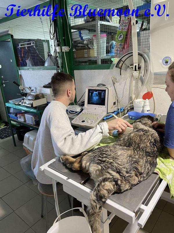 Tierarzt Volodja hat eine eigene Praxis im Tierheim - endlich auch gut ausgestattet